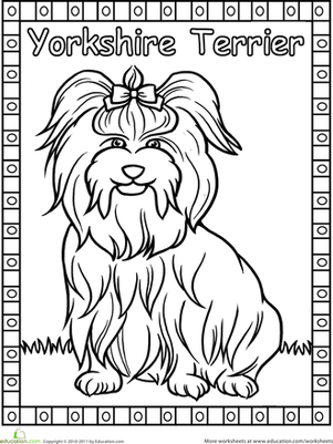 Kindergarten Coloring Worksheets: Yorkie Coloring Page