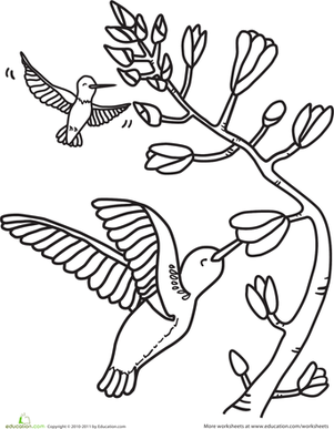 Kindergarten Coloring Worksheets: HUmmingbirds Coloring Page