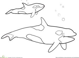 Preschool Coloring Worksheets: Killer Whale Coloring Page