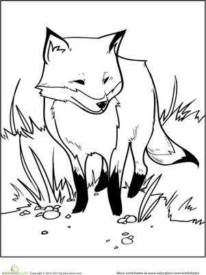 Color the Fox Coloring Page Education