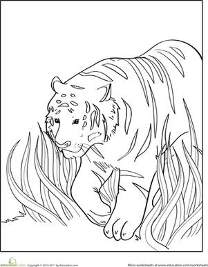 Color the Walking Tiger