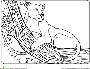 Kindergarten Coloring Worksheets: Color the Resting Lioness
