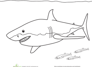 Color the Great White Shark | Worksheet | Education.com