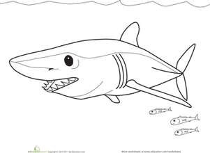 Preschool Coloring Worksheets: Color the Mako Shark