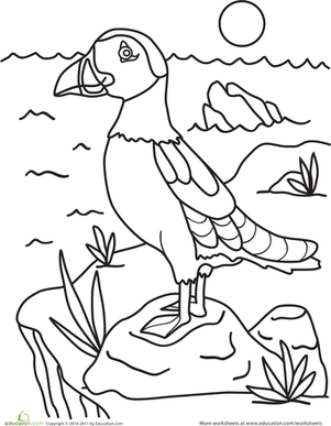 Pin Sea Birds Colouring Pages On Pinterest