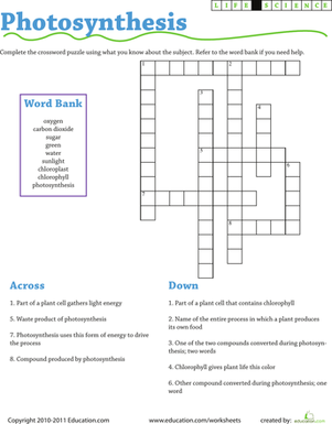 Life Science Crossword: Photosynthesis | Worksheet | Education.com