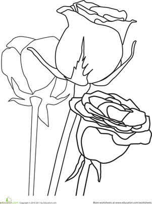 Preschool Coloring Worksheets: Color the Roses