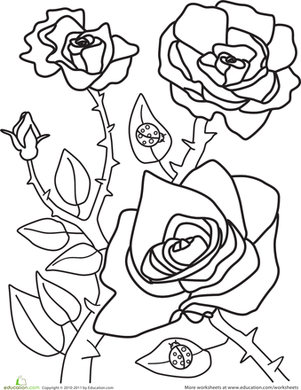 Kindergarten Holidays & Seasons Worksheets: Spring Roses Coloring Page