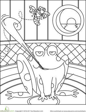 Kindergarten Coloring Worksheets: Frog Coloring Page