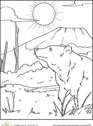 Color the Grizzly Bear