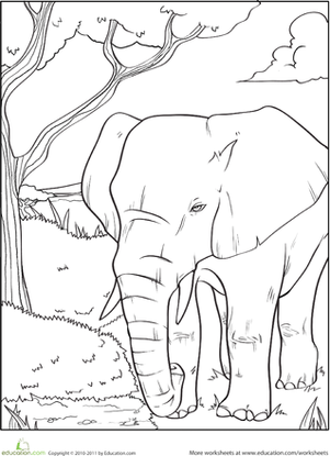 First Grade Coloring Worksheets: Elephant Coloring Page