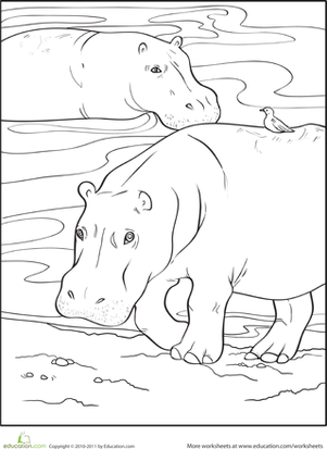 Color the Wading Hippopotamuses
