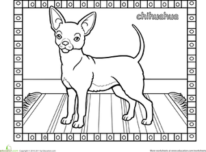 Chihuahua dog worksheet for Chihuahua coloring pages