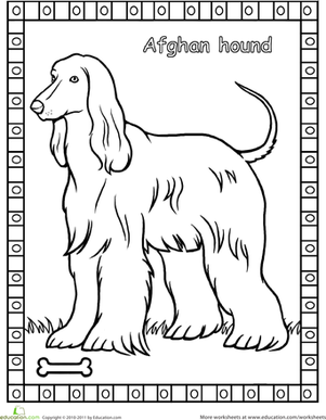 First Grade Coloring Worksheets: Afghan Hound Coloring Page