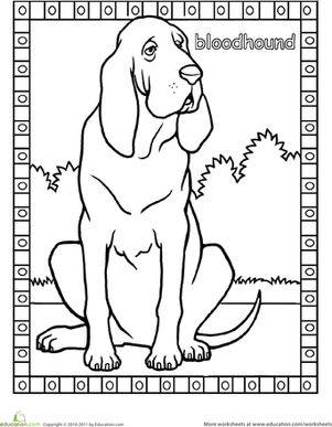 First Grade Coloring Worksheets: Bloodhound Coloring Page