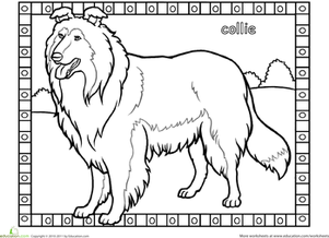 First Grade Coloring Worksheets: Collie Coloring Page