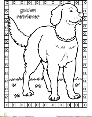 First Grade Coloring Worksheets: Color the Golden Retriever