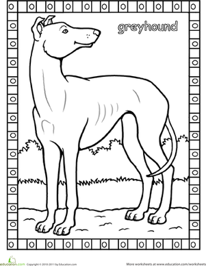 First Grade Coloring Worksheets: Greyhound Coloring Page