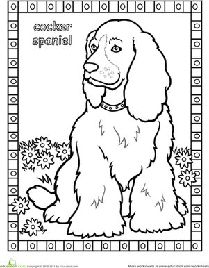 Free coloring pages of cokker spanil for English springer spaniel coloring pages