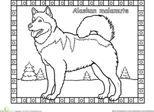 First Grade Coloring Worksheets: Alaskan Malamute Coloring Page