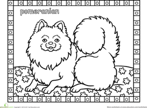 Color the Pomeranian | Coloring Page | Education.com