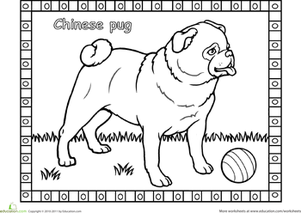 Pug Worksheet Educationcom