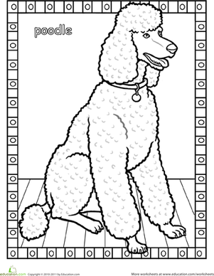 First Grade Coloring Worksheets: Poodle Coloring Page