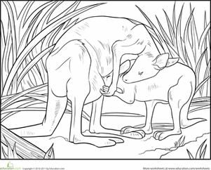 First Grade Coloring Worksheets: Baby Kangaroo Coloring Page