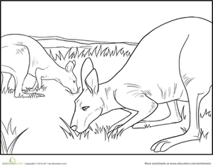 First Grade Coloring Worksheets: Color the Grazing Kangaroos