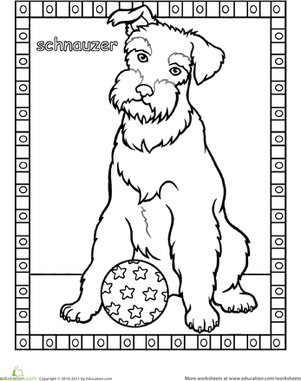 First Grade Coloring Worksheets: Schnauzer Coloring Page