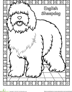 Color the English Sheepdog