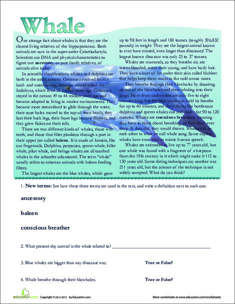 Second Grade Reading & Writing Worksheets: Whale Facts