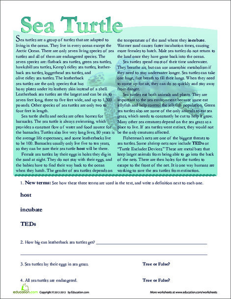 Second Grade Reading & Writing Worksheets: Sea Turtle Facts