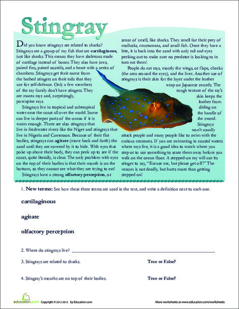 Second Grade Reading & Writing Worksheets: Stingray Facts