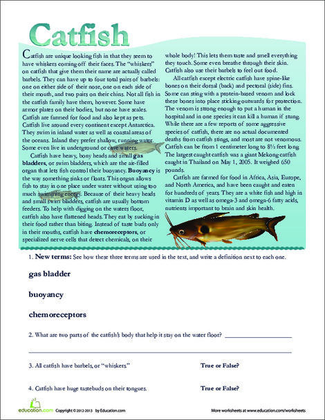 Second Grade Reading & Writing Worksheets: Catfish Facts