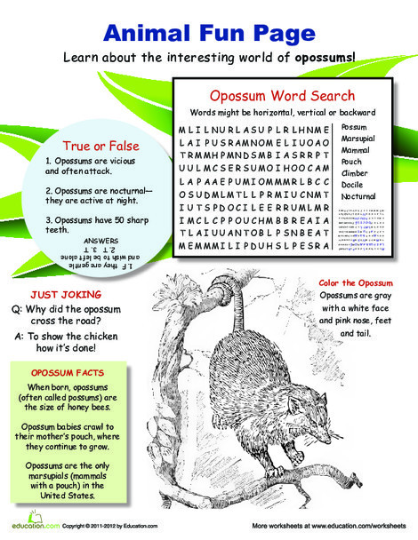 Fourth Grade Science Worksheets: Awesome Opossum