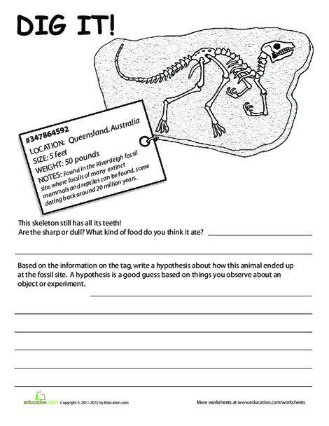 Second Grade Science Worksheets: Fossil Lesson: Dig It! #5