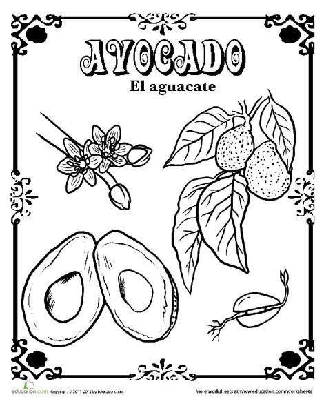 Kindergarten Reading & Writing Worksheets: Avocado in Spanish