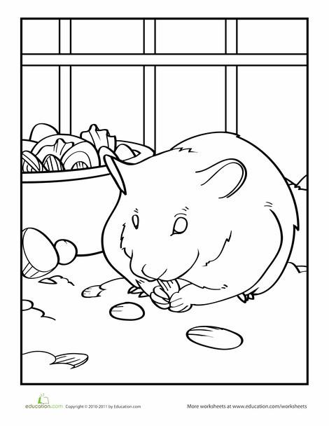 Preschool Coloring Worksheets: Hamster Coloring Page