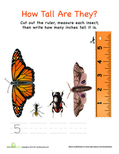 Preschool Math Worksheets: Measuring with a Ruler: Insects!