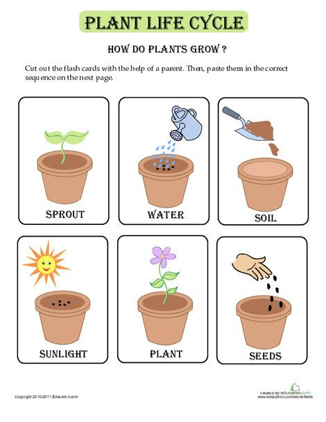 Kindergarten Science Worksheets: Plant Life Cycle Flash Cards