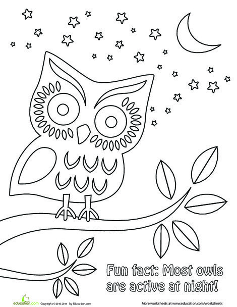 Kindergarten Coloring Worksheets: Nighttime Owl Coloring Page