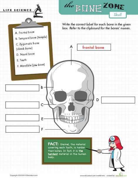 Fifth Grade Science Worksheets: Learn the Bone Zone: Skull