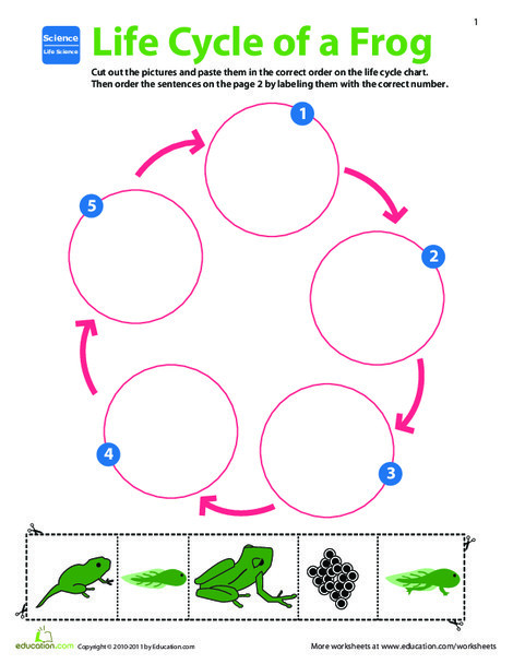 Second Grade Science Worksheets: Life Science Learning: Life Cycle of a Frog