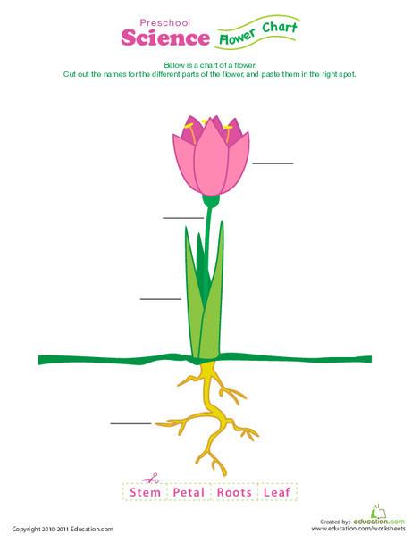 Preschool Science Worksheets: Complete a Flower Fill-In!