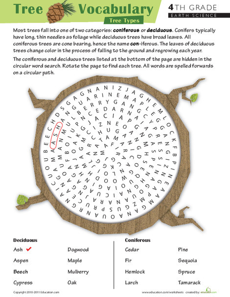 Fourth Grade Reading & Writing Worksheets: Take on Tree Terms: Word Search #1