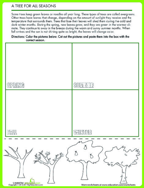 Second Grade Science Worksheets: Tree Seasons