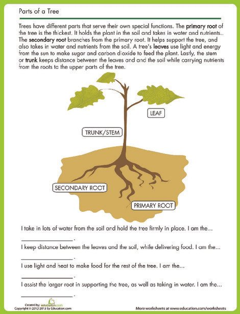 Second Grade Reading & Writing Worksheets: Tree Parts