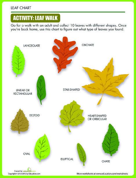 Second Grade Science Worksheets: Leaf Shapes