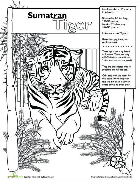 Second Grade Science Worksheets: Sumatran Tiger